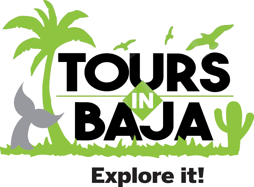 Tours in Baja